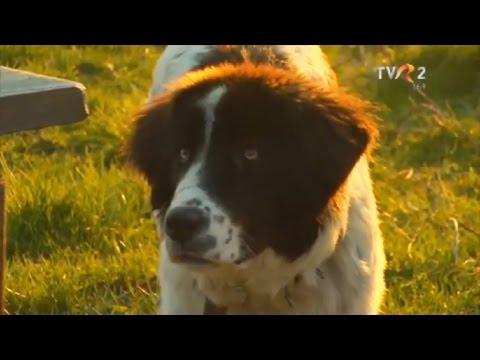 Natură şi aventură: Păstoritul pe Valea Bistriţei și ciobănescul de Bucovina