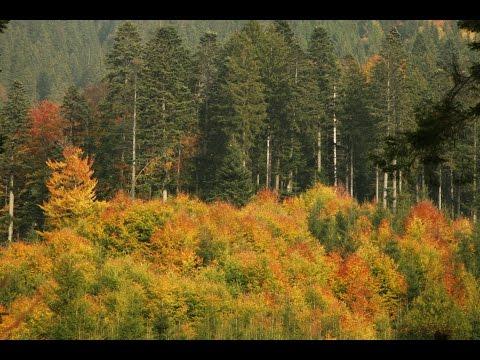 ROMANIA - WILD CARPATHIA 1