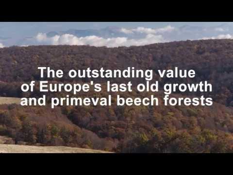 Video zur Nominierung der rumänischen Urwälder für die Liste des UNESCO-Weltkulturerbe