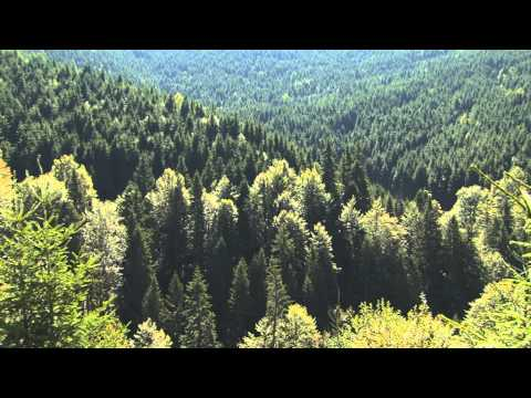 The Carpathians - Europe's Only True Wilderness