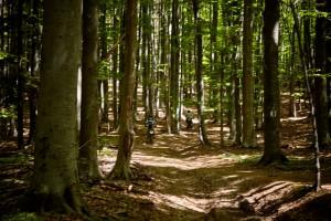 Endurowandern-Märchenwald